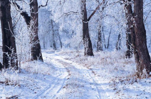Украину накроет самая холодная зима века. Чего ждать?