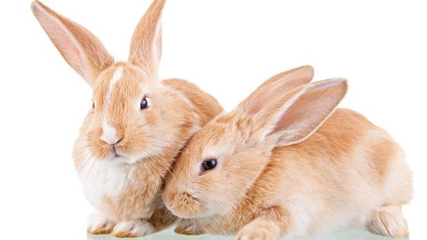 22 интересных факта о кроликах
