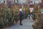 Новый год 2020: сколько будут стоить елки
