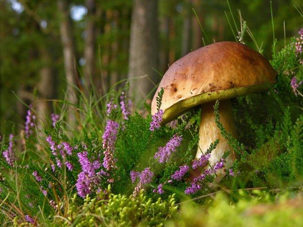 Медики рассказали, кому категорически нельзя есть грибы: это очень серьезно
