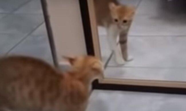 Кот поругался со своим же отражением и рассмешил сеть, уморительное видео