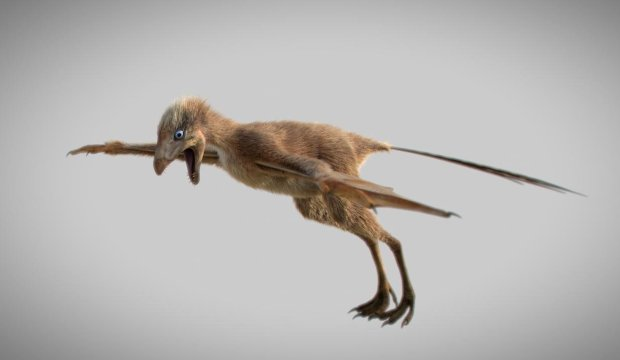 Ученые показали необычного динозавра весом всего 200 грамм: невероятное видео