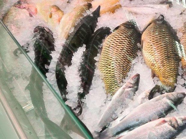 На прилавках киевских супермаркетов — рыба из Чернобыля! Перед тем, как туда попасть, ее еще и газом отравили. Как это возможно?!