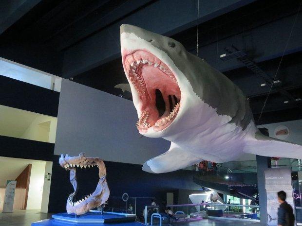 Зуб мегалодона