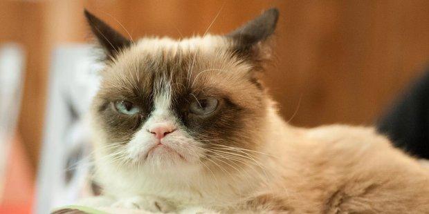 """Грустная новость о """"сердитой кошке"""": умерла всемирноизвестная Grumpy Cat"""