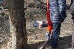Юля штурмует Украину и речь не о Тимошенко. Стихия забирает жизни, в Одессе женщину убило веткой дерева