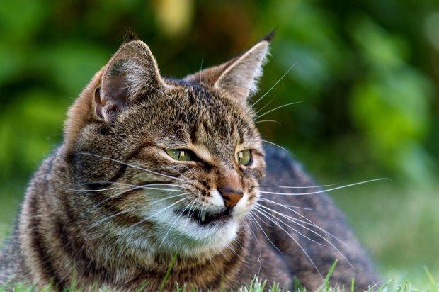 В Украине зреет «кошачий майдан». Под видом учета домашних животных украинцев хотят обокрасть на 2 млрд