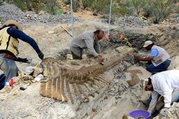 Ученые обнаружили древнейшую рептилию: мир науки ошеломлен, многие теории будут разрушены