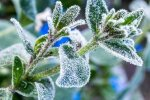 Заморозки. Фото: ЧЕline