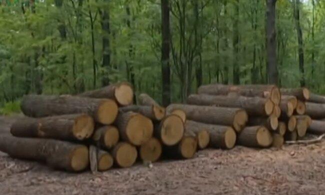 """Вред экологии почти на миллион: Тернопольским """"лесорубам"""" светит несколько уголовных производств"""