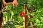 Стоит употреблять сезонные овощи. Фото: youtube