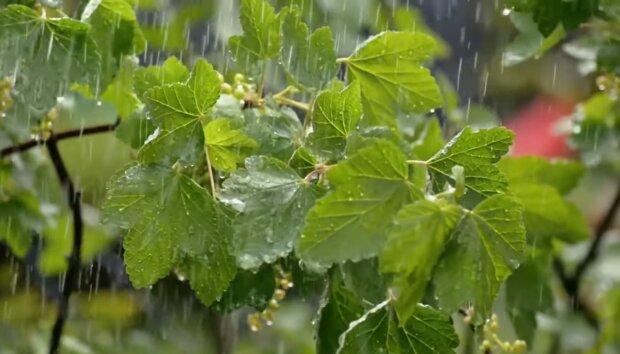 Дождь. Фото: скриншот YouTube-видео