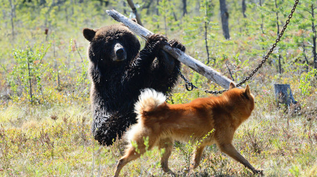 Депутат тренировался издеваться над людьми на животных, зоозащитники показали ужасающие фото