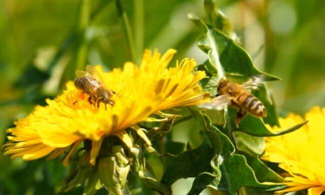20 мая - День пчел. Фото: youtube