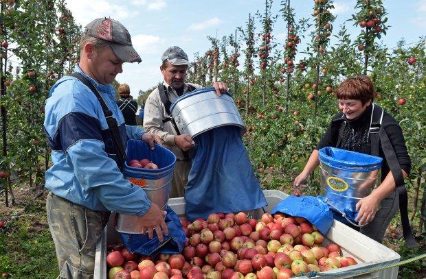 Украинским заробитчанам рассказали, куда категорически нельзя ехать: «Поддерживают высылку мигрантов»