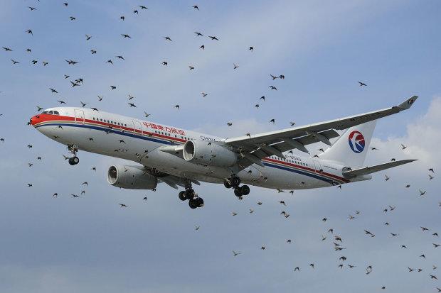 Что происходит, когда птица сталкивается с самолетом?