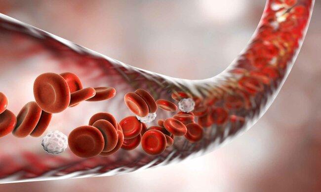 Кардиолог назвал главную причину возникновения тромбов: в опасности каждый