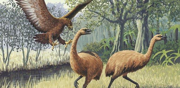"""В Новой Зеландии обнаружена редкая археологическая находка: """"оцепенели, а потом радовались, как дети"""""""