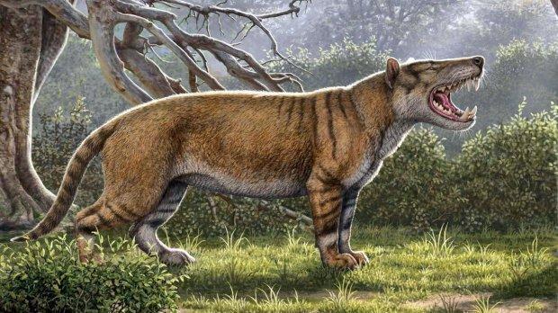 """Ученые переписали историю одной находкой: """"жил 20 миллионов лет назад"""""""