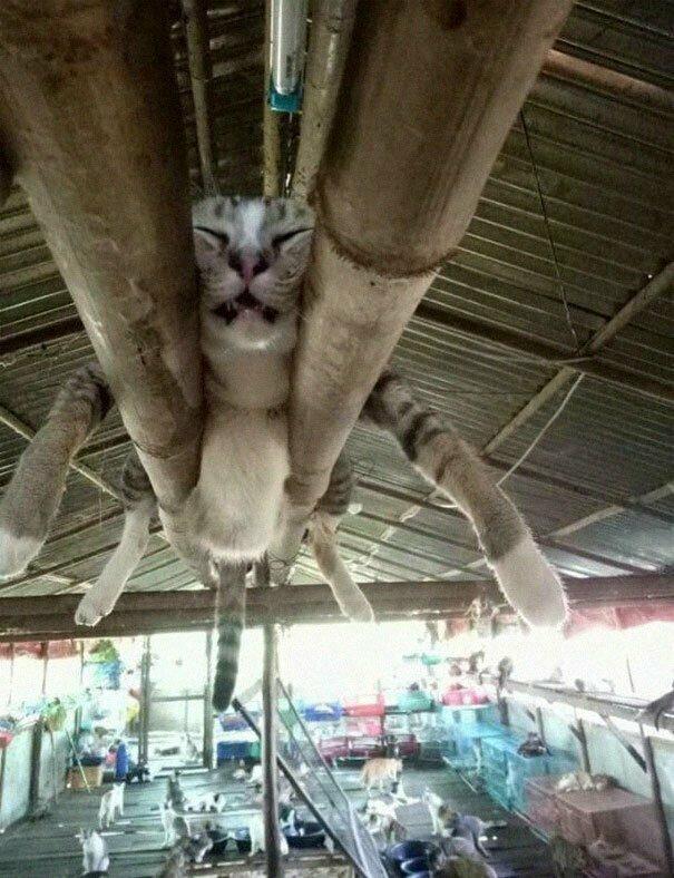 Не коронавирусом единым: коты, заснувшие в самых неподходящих местах (ФОТО)