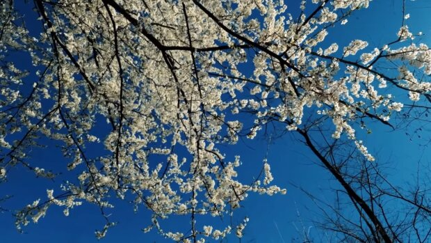 Весна. Фото: скриншот YouTube-видео