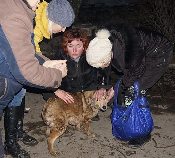 Харьковские живодёры были жёстко наказаны неравнодушными жителями Бердянска (фото, видео)