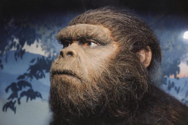 Антропологи назвали существо, от которого на самом деле произошел человек