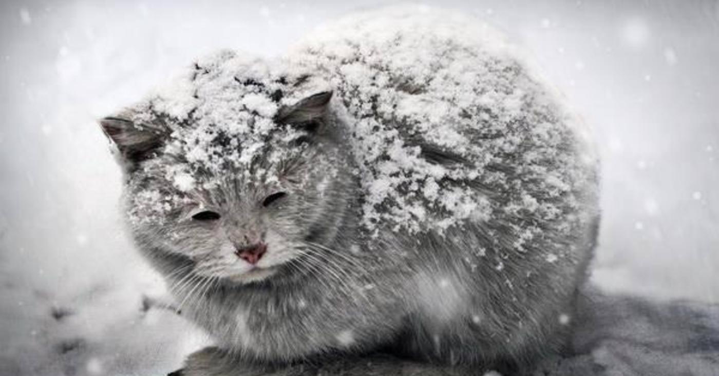 ледяной кот фото