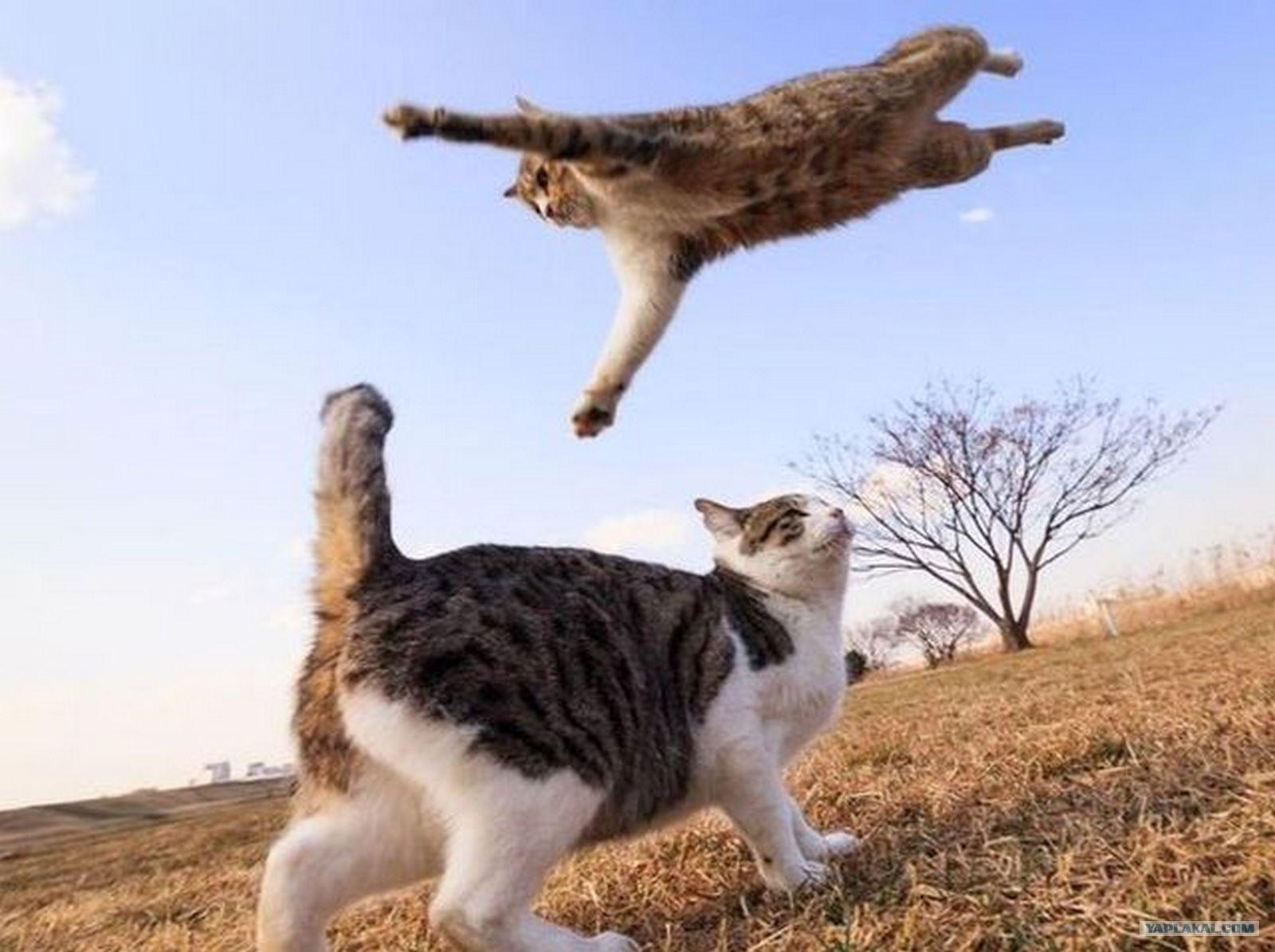смешные картинки на тему котов нашей