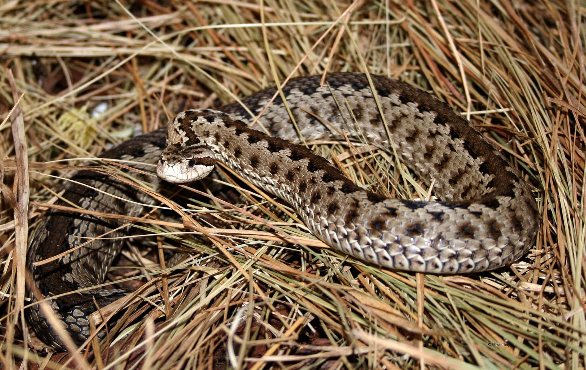 для мусульман змеи живущие в башкортостане с фото наличие них энтузиазма